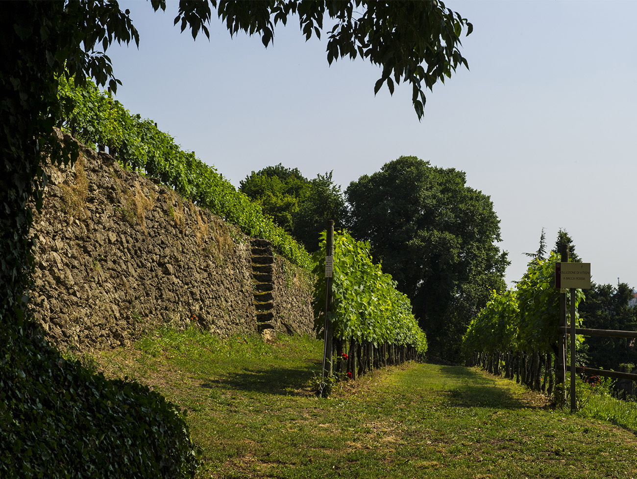 DSC_2023_terrazza_verde